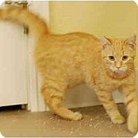 Adopt A Pet :: CiCi - Modesto, CA