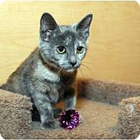 Adopt A Pet :: Adele - Farmingdale, NY