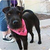 Adopt A Pet :: Lorna - Arlington, TX