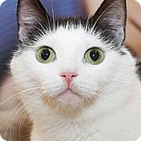 Adopt A Pet :: Marguerite - Irvine, CA
