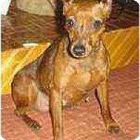 Adopt A Pet :: Dory - Florissant, MO