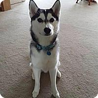 Adopt A Pet :: Spirit - Elkhart, IN
