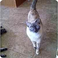 Adopt A Pet :: Ping and Pong - Gilbert, AZ