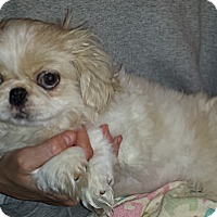 Adopt A Pet :: Augustus - Salem, NH