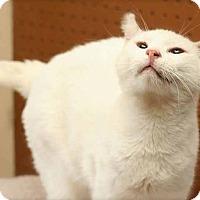 Adopt A Pet :: Casper - San Antonio, TX