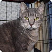 Adopt A Pet :: Precious - Middletown, CT