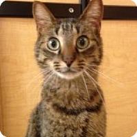 Adopt A Pet :: DaVinci - McHenry, IL