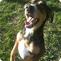 Adopt A Pet :: 1-1 McQueen - Triadelphia, WV