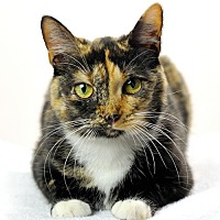 Adopt A Pet :: Trudy - Oxford, MS