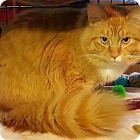 Adopt A Pet :: fern - brewerton, NY