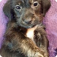 Adopt A Pet :: Keanu - Lawrenceville, GA