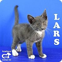 Adopt A Pet :: Lars - Carencro, LA