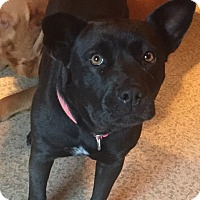 Adopt A Pet :: Bear Bear - CHICAGO, IL