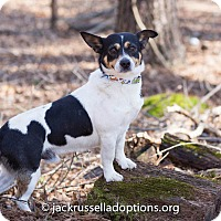 Adopt A Pet :: Jake - Conyers, GA
