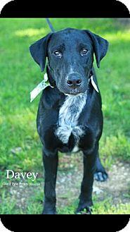 Labrador Retriever Mix Dog for adoption in Valparaiso, Indiana - Davey