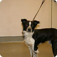 Adopt A Pet :: Darrin - Wildomar, CA