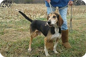 Hound (Unknown Type) Mix Dog for adoption in Cincinnati, Ohio - Jingo