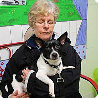 Adopt A Pet :: Pudgie - Elyria, OH