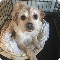 Adopt A Pet :: Puddin - Healdsburg, CA