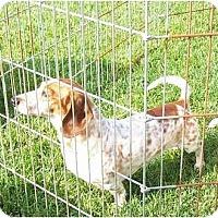 Adopt A Pet :: Charlie - Garden Grove, CA