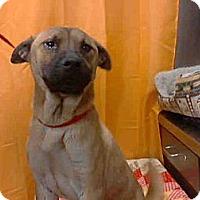 Adopt A Pet :: Silas NEEDS FOSTER ASAP - Sacramento, CA