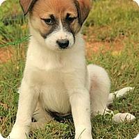 Adopt A Pet :: Josie - Brattleboro, VT