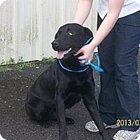 Adopt A Pet :: Rock - Tunbridge, VT