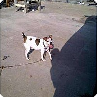 Adopt A Pet :: Murray in Houston - Houston, TX