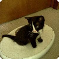 Adopt A Pet :: The Flash - Columbus, OH