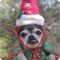 Adopt A Pet :: Elvira - Pembroke Pines, FL