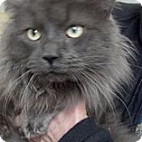 Adopt A Pet :: Winston - Sterling Hgts, MI