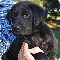 Adopt A Pet :: *Daisy Mae - PENDING - Westport, CT