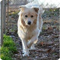Adopt A Pet :: Rhett - New Boston, NH