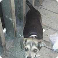 Adopt A Pet :: Heidi - Hazard, KY
