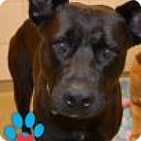 Adopt A Pet :: Gypsy - Miami, FL