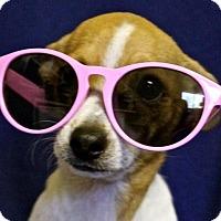 Adopt A Pet :: BB - Winters, CA