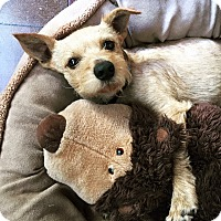 Adopt A Pet :: Mitchell - Mission Viejo, CA