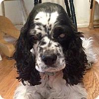 Adopt A Pet :: MollyG 15-017 - Parker, CO