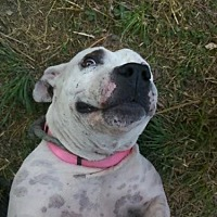 Adopt A Pet :: BeBe - Austin, TX