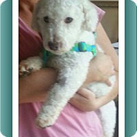 Adopt A Pet :: Adopted!! Blitzen - SE TX - Tulsa, OK