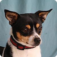 Adopt A Pet :: Kiwi - Edmonton, AB