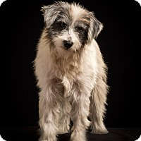 Adopt A Pet :: Andover-MEET HIM - Norwalk, CT