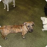 Adopt A Pet :: Carmela Soprano - Jersey City, NJ
