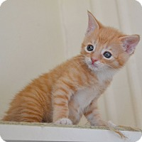Adopt A Pet :: Ziggy - Brooklyn, NY