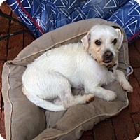 Adopt A Pet :: Zippy!!! - Rowayton, CT