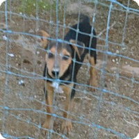 Adopt A Pet :: Mike - Tonopah, AZ
