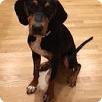 Adopt A Pet :: Gunner - Mooresville, NC