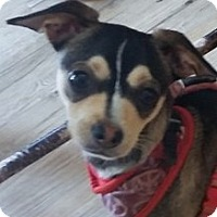 Adopt A Pet :: Paco - Newnan, GA
