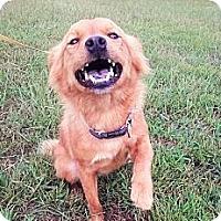 Adopt A Pet :: Dexter~ meet me! - Glastonbury, CT