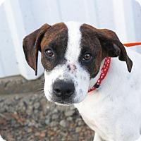 Adopt A Pet :: Oz - Mayflower, AR